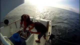 Pêche à la traine été 2013