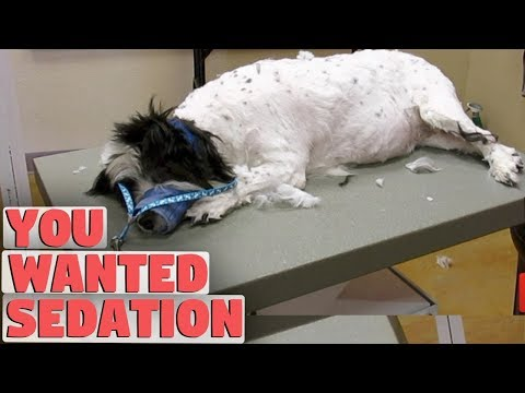 Will My Dog Wake Up After A Sedated Groom