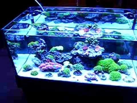 Grim S 45 Gallon Rimless Reef Aquarium Youtube
