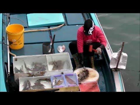 Sai Kung, Hong Kong. The Live Fish And Seafood Market On The Boats. Part 4