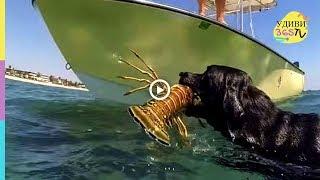 ВАУ! Уникальные кадры с животными. WOW! Unique frames with animals.