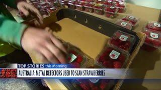 Video Extra: Strawberry needle scare