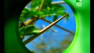 Защита растений от животных