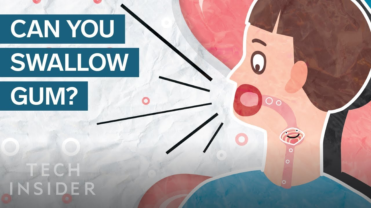 Here's What Happens In Your Body When You Swallow Gum | The Human Body
