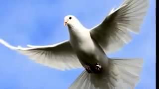 أنا طير فى السما
