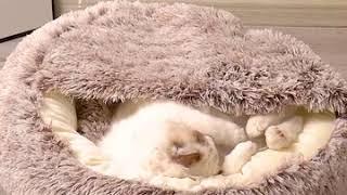 따뜻한 고양이이불 겨울용 침낭 강아지침대 캣배딩 사계절…