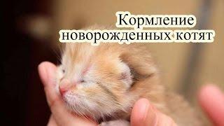Кормление новорожденных котят, чем их кормить и как