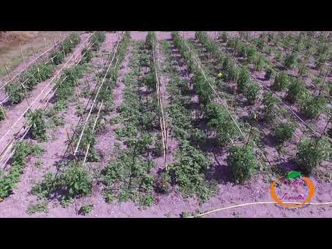 Jardins de Tomates : Nos installations au Château de Landiras