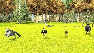 Animal Race for kids ostrich Vs Leopard,gazelle,buffalo..