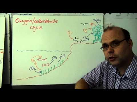 Environmental Systems - Oxygen/carbon Dioxide Cycle