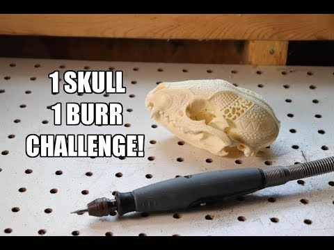 Carving a Raccoon Skull with only one Burr!