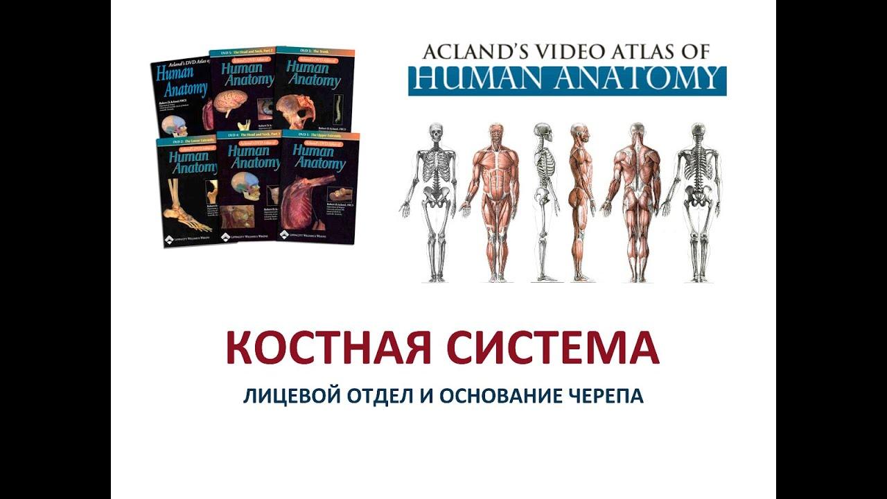 Acland Anatomy Dvd Choice Image - human anatomy diagram organs