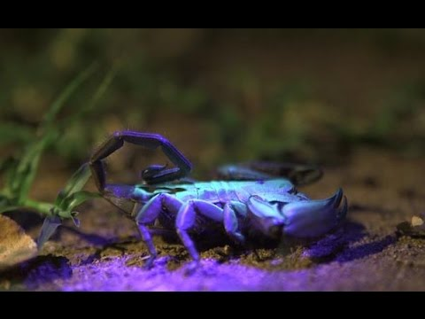 Home - Spider & Scorpion Of Southern Africa