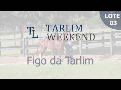 Lote 03 - Figo da Tarlim  (Potros Tarlim)