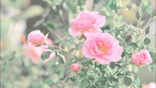 [チャート] 癒し ☆ 切ない ☆ 元気 ☆ ファンタジー ☆ かわいい カッコ...