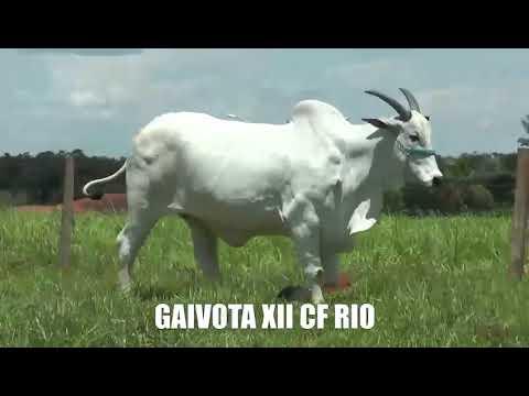 Lote 02   Gaivota XII CF Rio