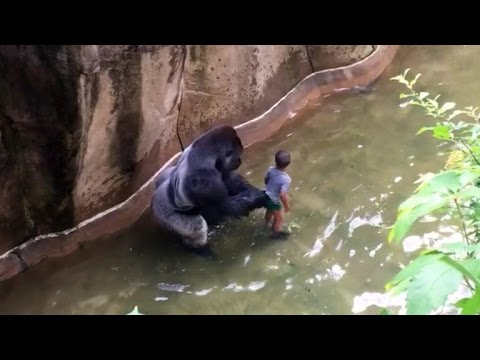 Mom of Boy Who Fell Into Gorilla Enclosure: I Watch on My Kids, Accidents Happen
