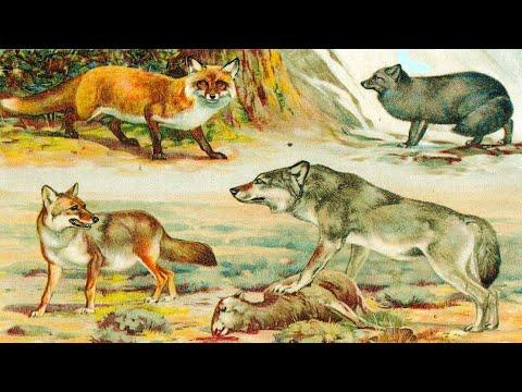 Эволюция собаки (рассказывает палеонтолог Ярослав Попов)