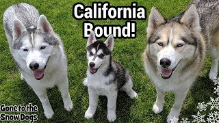 Huskies Road Tripping to California!