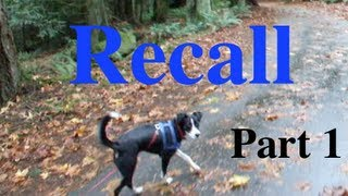 Shaping A Dog's Recall Part 1 Capturing A Check In/eye Contact Clicker Training