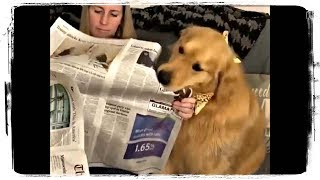 ПРИКОЛЫ С ЖИВОТНЫМИ, ПРИКОЛЫ С СОБАКАМИ   FUN WITH ANIMALS, FUNNY DOGS #478