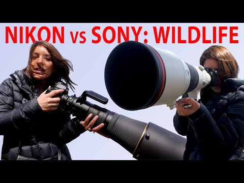 Nikon vs Sony: Wildlife Photography (D850 vs a7R III vs a9)