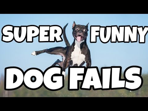 Funny Dogs | Doggo Vines | Cute Puppies