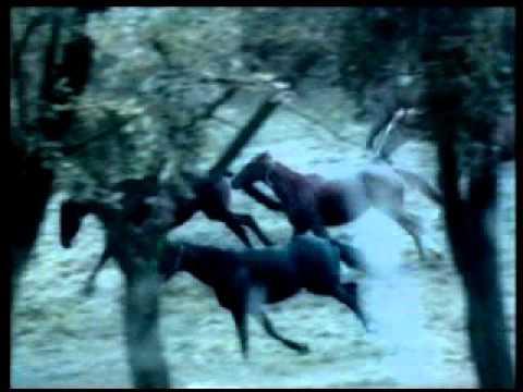 Ebenová videa na koni
