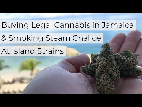 Buying Legal Cannabis In Jamaica & Smoking Steam Chalice At Island Strains