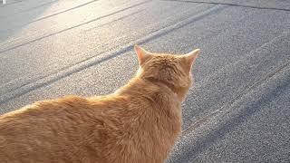Кошки ,(как и собаки) потеют через язык .!?
