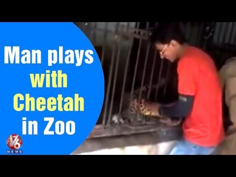 Man plays with Cheetah in Zoo - Teenmaar News (09-06-2015)