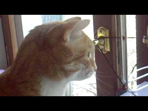 Кот в форточке гавкает видео
