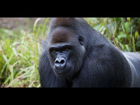 103 kills gorilla trip :D