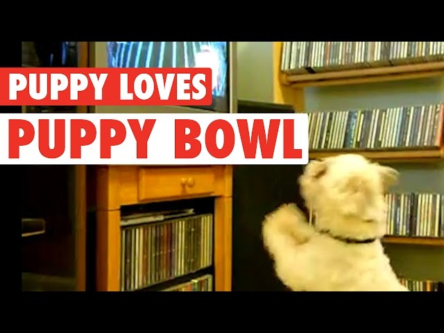 Puppy Loves Puppy Bowl