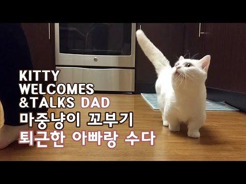 마중냥이 꼬부기 퇴근한 아빠랑 수다 CAT WELCOMS & TALKS TO OWNER