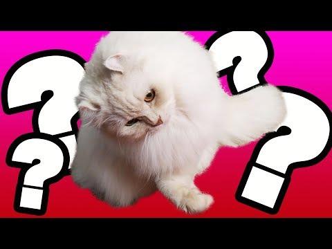 うちの猫がよく首をかしげるのは困ってるから?