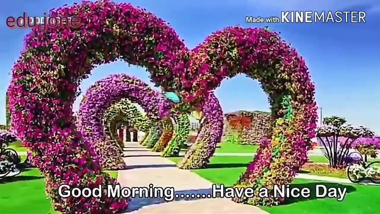Flowers Designing And Art Beautiful Garden Good Morning Whatsapp