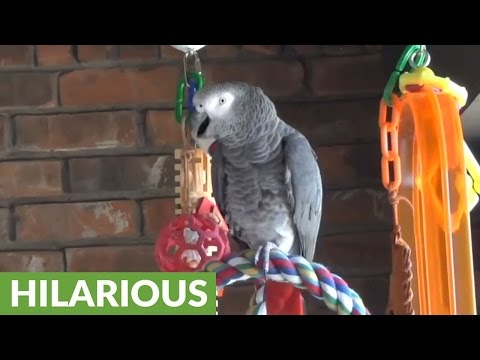 Parrot perfectly imitates barking dog next door