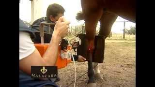 Atrás cavalo se charley do como joelho livrar do