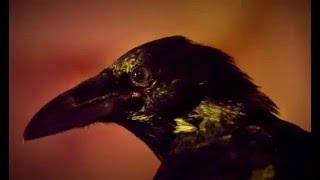 Edgar Allan Poe's The Raven 2011 Full movie