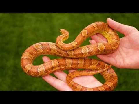 أشد أنواع الثعابين سما وفتكا إحذر أن تقترب منها