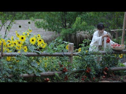 陸綜-李子柒 Liziqi -EP 009-番茄………的一生?