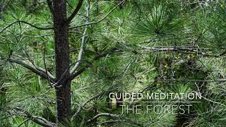 THE FOREST: 5 Minute Guided Meditation | A.G.A.P.E. Wellness
