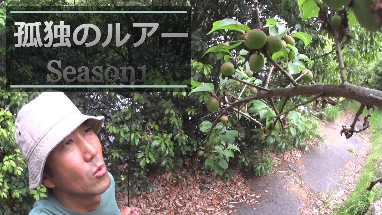 【バス釣りドラマ】孤独のルアー アフタースポーン期の剥げ散らかしたポップR