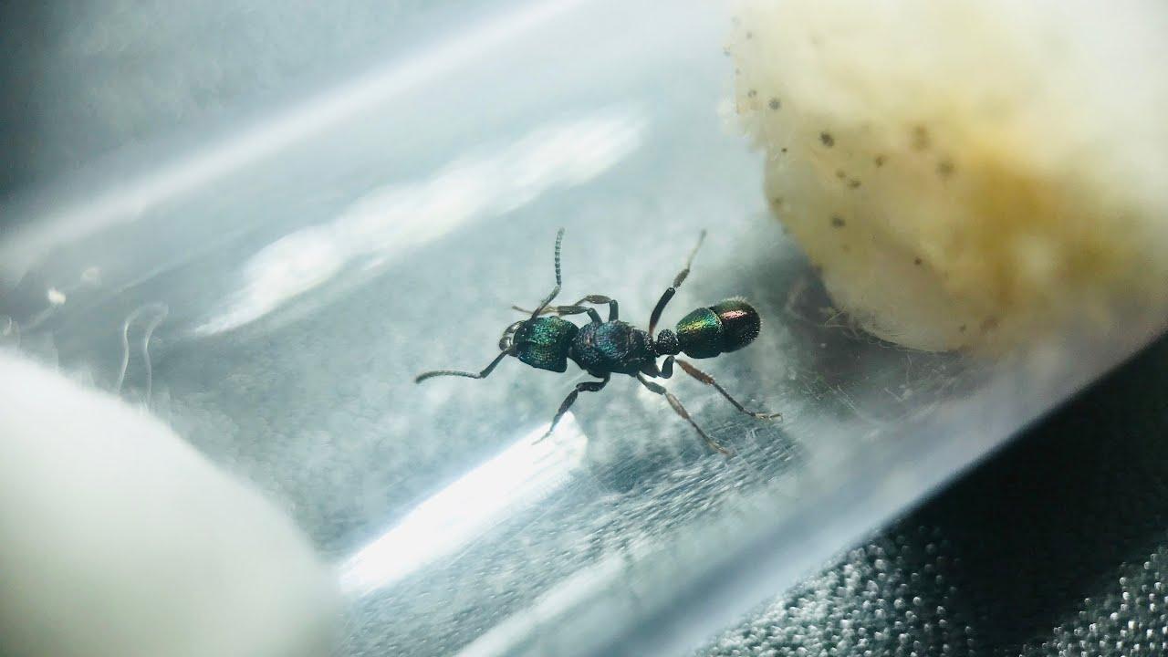 Ameisen aus der ganzen Welt! - Das große Unboxing