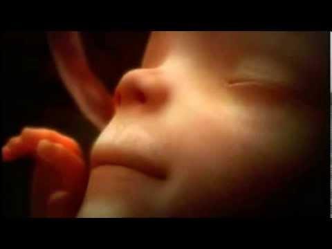 9 Monate Schwangerschaft in 4 Minuten