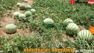 Download Video LAGU BANDARA KERTAJATI BIJB MP3 3GP MP4