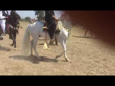 Syed Ali Raza Bukhari horse riding