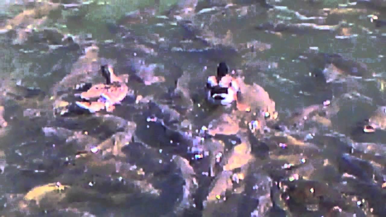 Oasis Joe Pool Lake Grand Prairie Tx Youtube