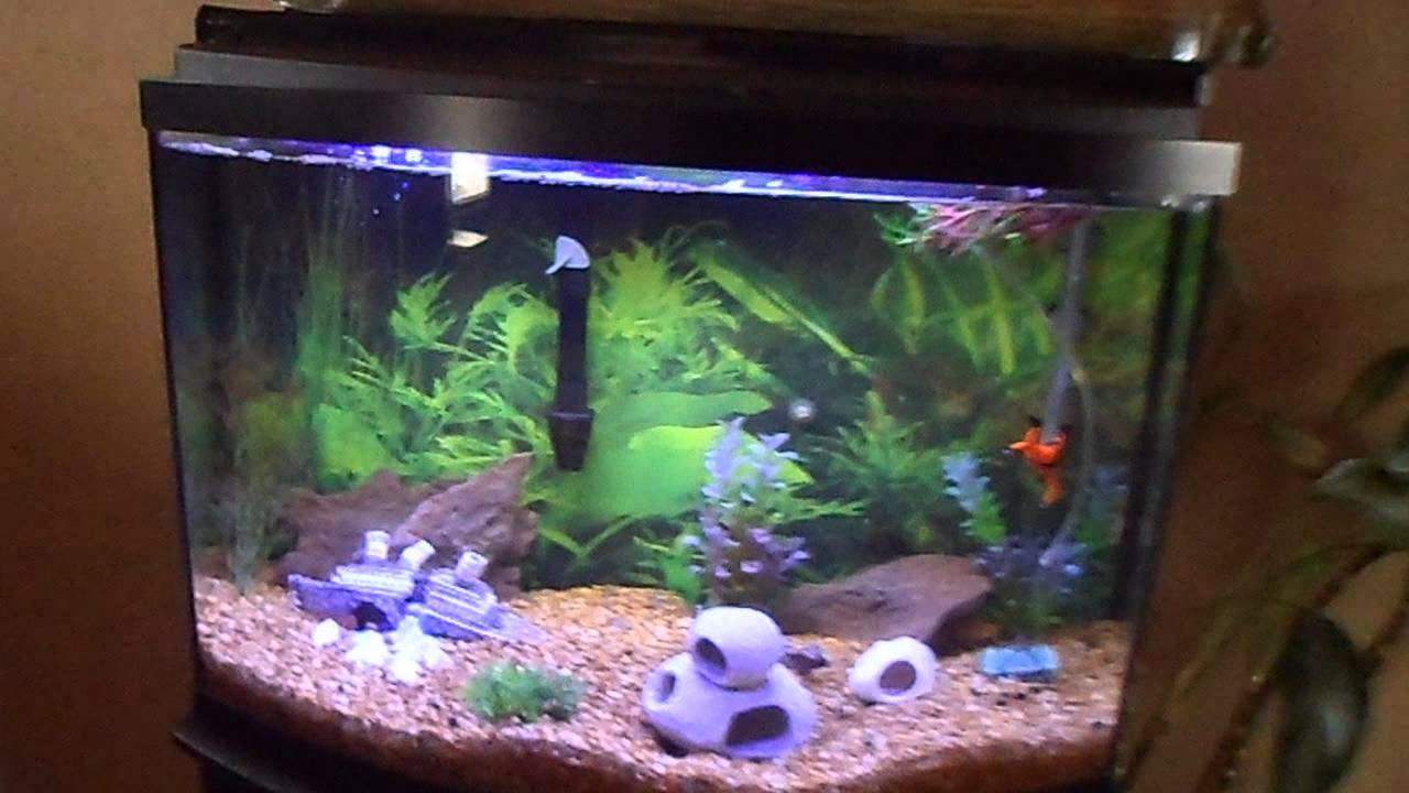 36 gallon bow front cichlid tank youtube for Bow fish tank